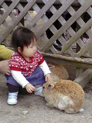 ウサギとカホ