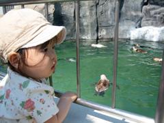 動物園★デビュー